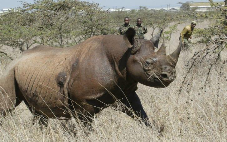 有科学家开始在众筹网站集资为黑犀牛做 DNA 排序