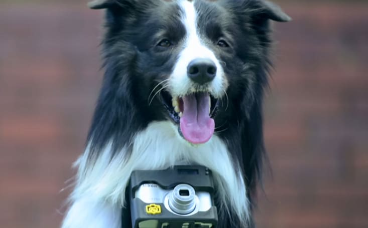 Nikon's doggy camera mount snaps when Rover gets excited