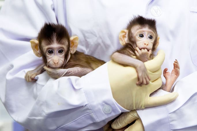 Scientists clone monkeys for the first time