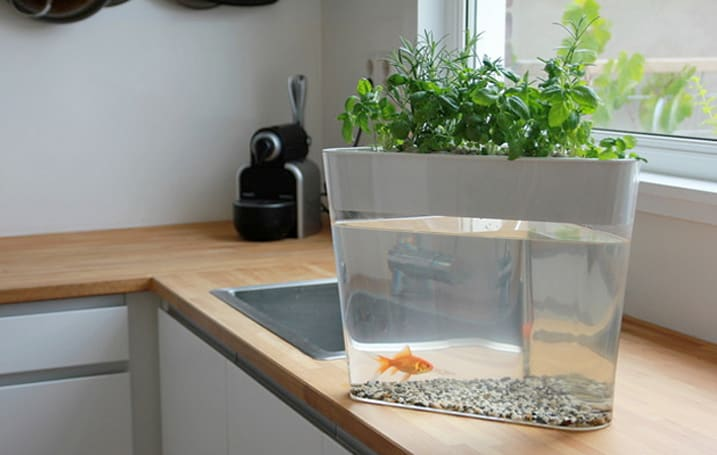 Finally, a hydroponic farm that runs on goldfish poop