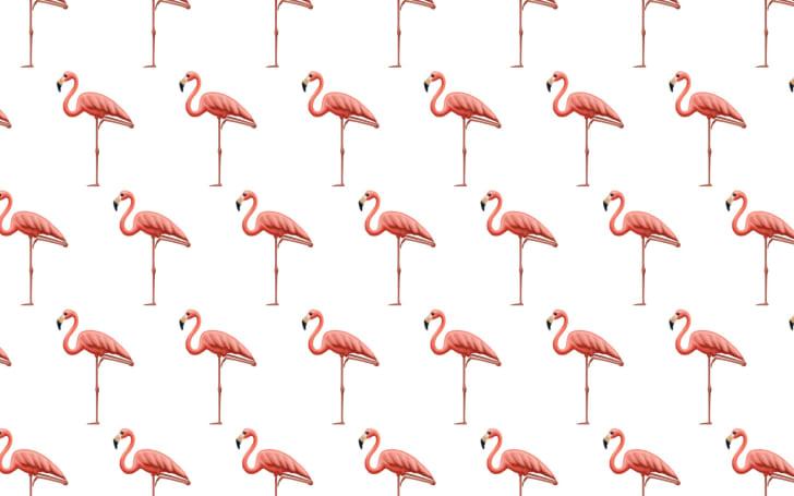 2019's emoji hopefuls include a service dog and flamingo