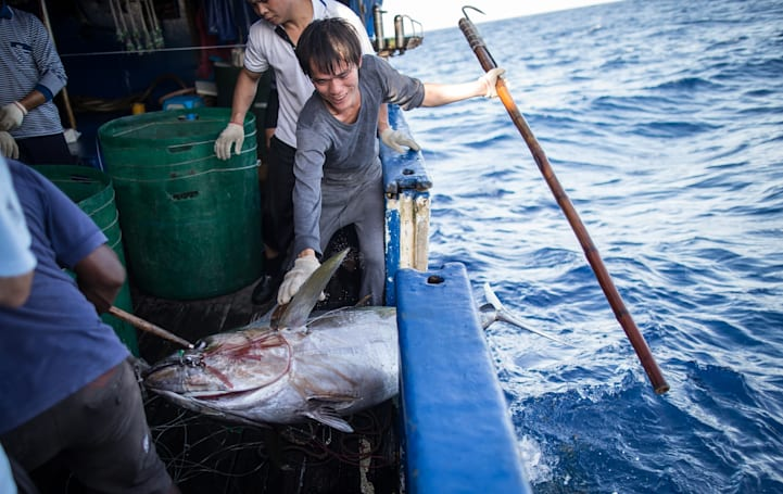 How humans and machines can work together to save the tuna