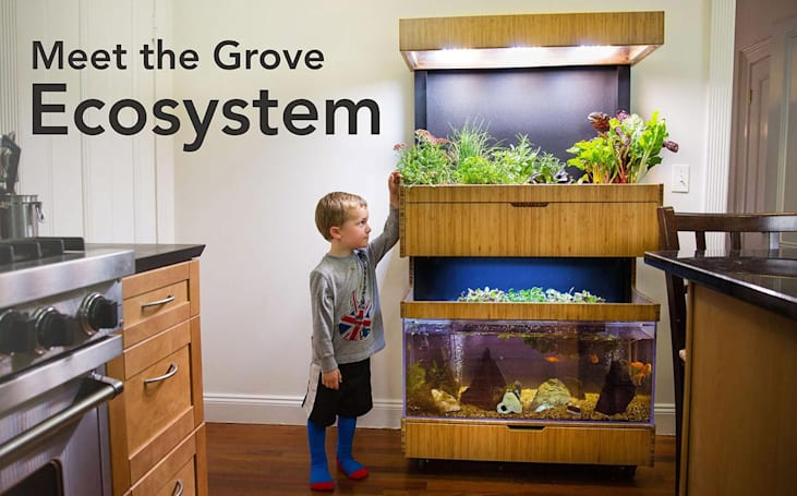 Grove grows your veggies indoors using LED lights and fish poop