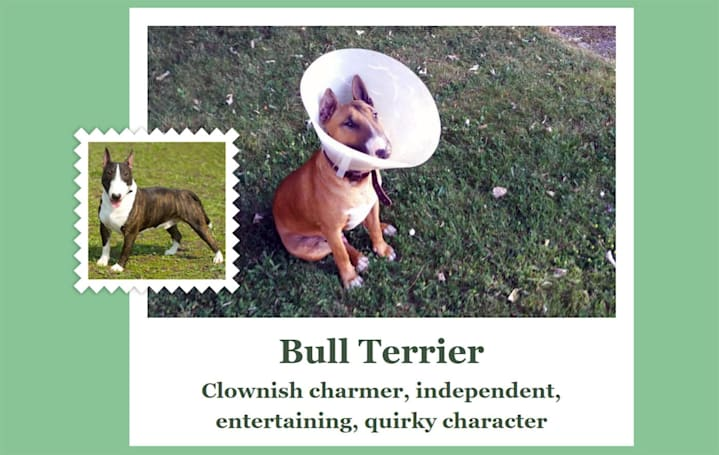 Microsoft's wacky AI app matches you with a dog breed