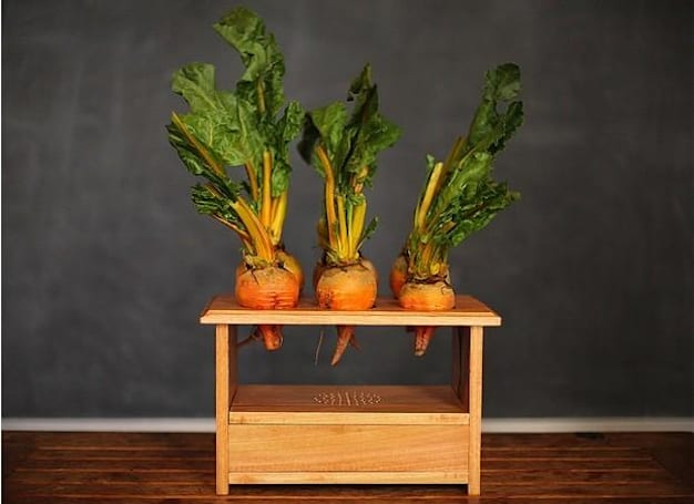 BeetBox drops a beat with a side of Raspberry Pi, and other plant puns (video)