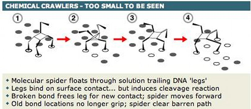 Molecular spiders can cut grass, fight one another, and save lives?