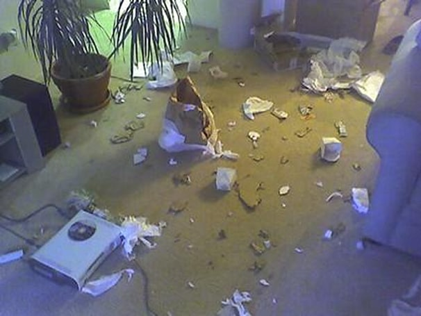Dog left alone with 360: carnage ensues