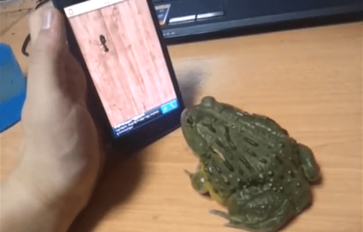 Merry Christmas, here's a frog playing video games