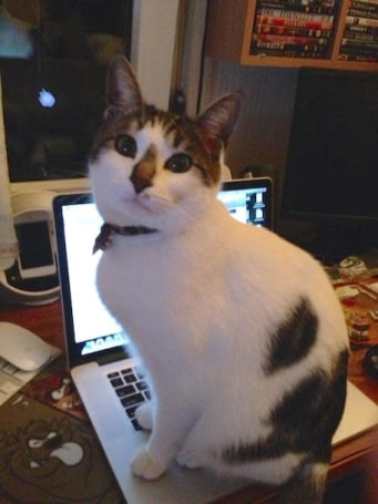 Caturday: Charis the assistant editor