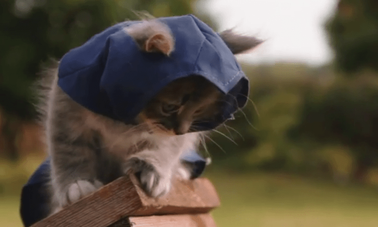 Murder is just adorable in Assassin's Kittens Unity