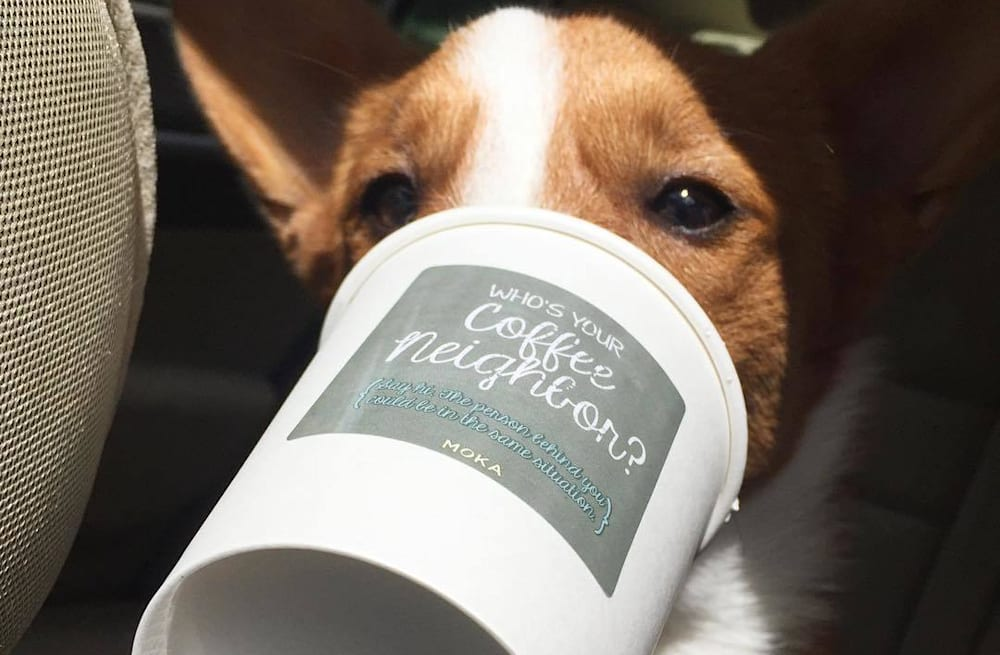 starbucks has a secret menu for dogs too aol lifestyle