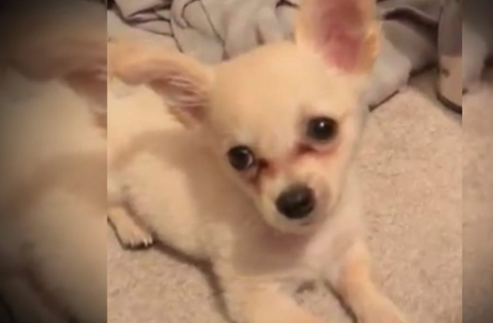 Puppy found with heartbreaking letter in airport bathroom: 'My ex