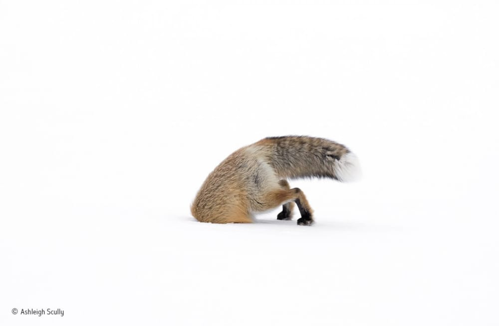 14 brutal, beautiful images from this year's Wildlife