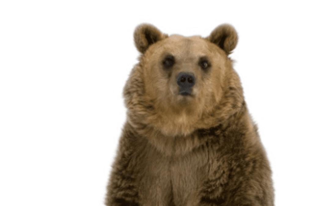 Is Inflation The Hibernating Bear Aol Finance