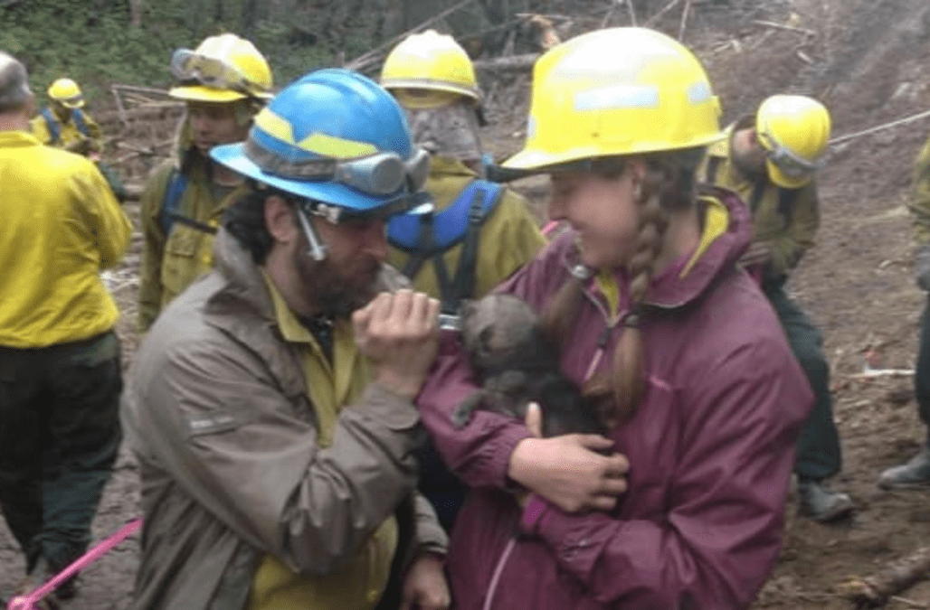 Alaska Firefighters Rescue Five Wolf Pups After Massive