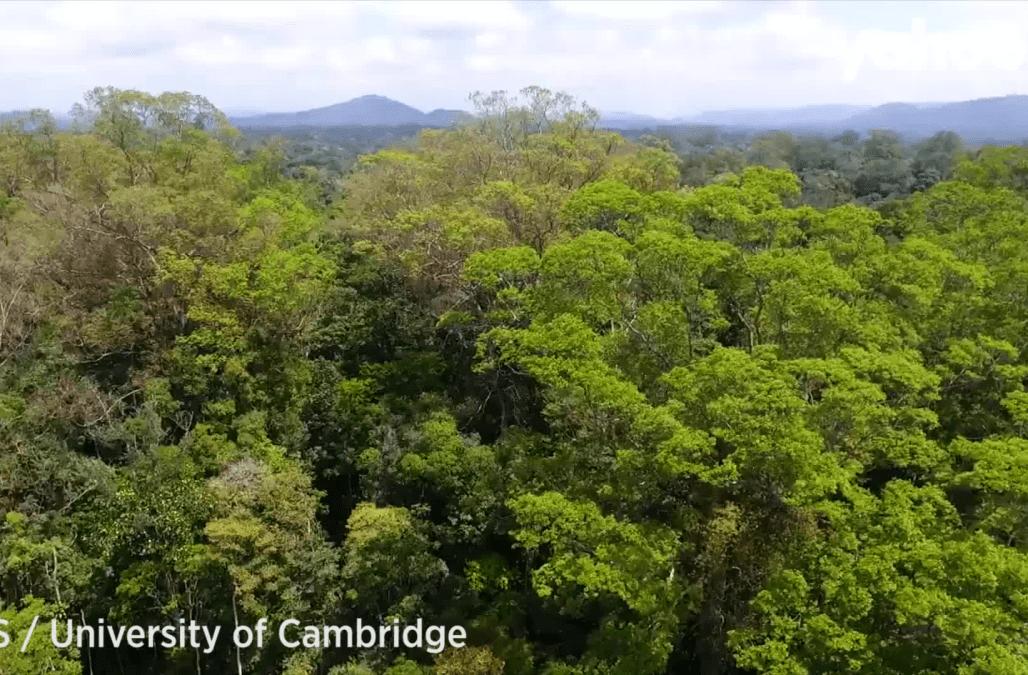 Tallest Tree Found In Amazon Rainforest Is 100 Feet Taller