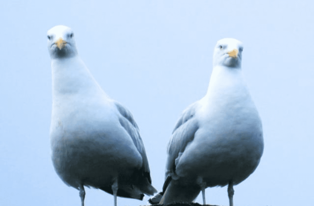 Staring out seagulls is the secret to protecting your chips