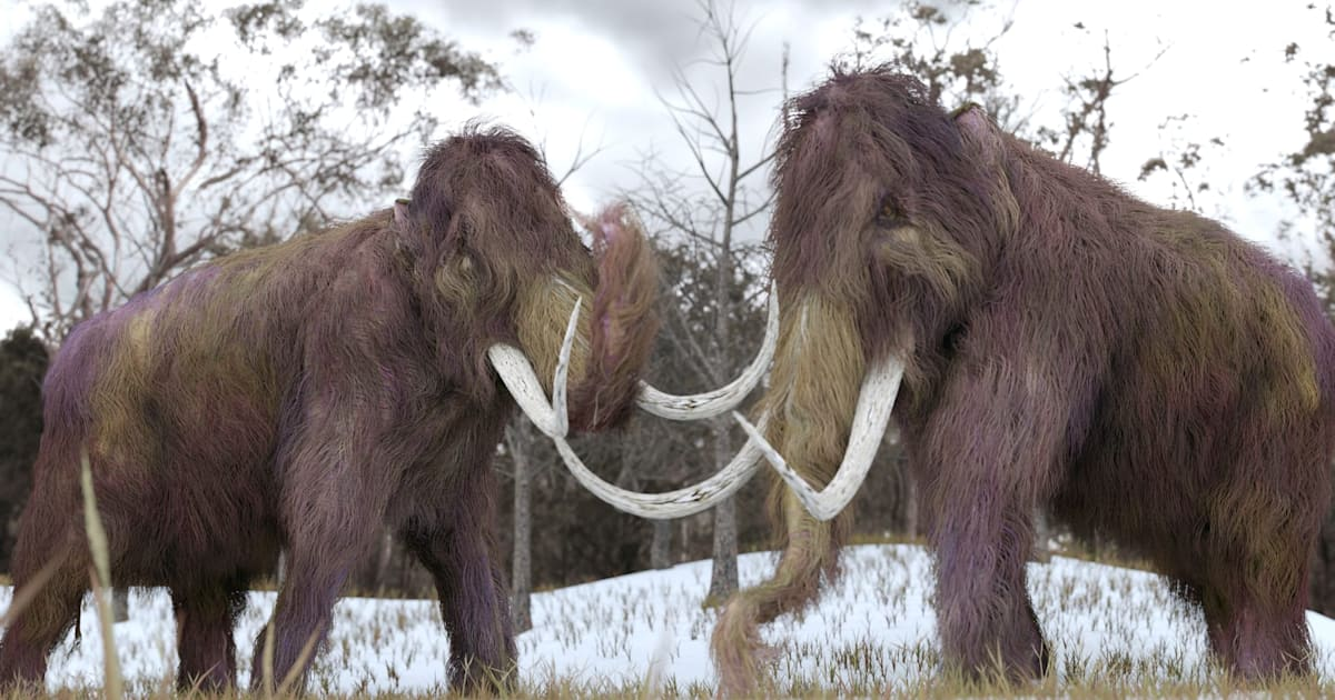 'Resurrected' mammoth DNA helps explain why the species went extinct