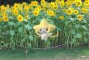 ポケモンGO Fest横浜イベントでやることガイド。ジラーチクエストと限定ポケモン、色違いも