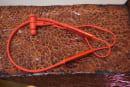 華為新的 FreeLaces 頸掛式無線耳機可以直接插在手機上充電