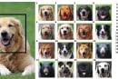 Nvidia、ペットの表情を他の動物画像に移植するAI技術を開発