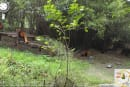 Google adds zoos to Street View, heroically avoids calling it 'Street Zoo'