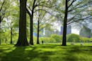 Politician wants to give 200 NYC trees email addresses