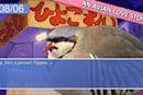 'Sailor Moon' in a post-apocalyptic pigeon-dating simulator