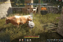 You can milk cows in Black Desert