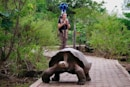 Google Trekker to put the Galapagos Islands on Street View, one tortoise at a time