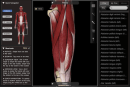 Muscle System Pro II shows the great potential of iPad apps