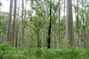 Artificial trees could function as solar-wind harvester