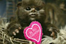 Love in the time of Ewoks