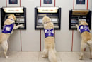 """Assistance dogs relieve """"ruff"""" times at the ATM"""
