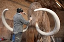 Scientists fully decode a pair of mammoth DNA genomes