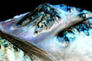 There may be water on Mars, but not much