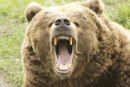 Use your iPhone to scare a bear (right before it eats you)