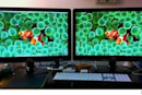 Calibrate your monitors for cheap