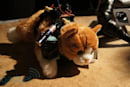 Cat Car turns your feline into a furry RC vehicle