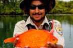 Photo Of 14-Inch Goldfish Found In Niagara River Goes Viral