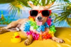 This Is What Every Pet Owner Needs To Know About Keeping Animals Cool In The Heatwave
