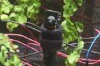 London Zoo teaching plant to take selfies