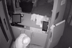 Thief Caught on Camera Stealing Donation Money From Leeds Cat Cafe