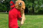 Golden leaps into his owner's arms to greet him every day