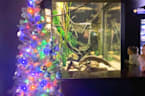 The Eel-letric Christmas Tree