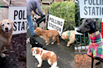 Dogs At Polling Stations: General Election 2019