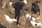 Street dogs in Egypt receive medical care and increased adoptions