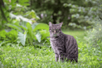19-jährige Katze verirrt sich im Wald: Doch was dann passiert, ist richtig traurig