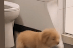 Viral video captures puppy stealing a roll of toilet paper