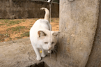 This cute little cat is very thirsty